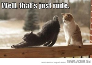 funny-cat-stretching-rude